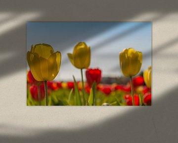 Tulpen von Maria Nevels