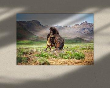 IJslandse paarden van Yvette Baur