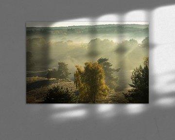 Morgendämmerung auf der Brunssummerheide von Peter Lambrichs