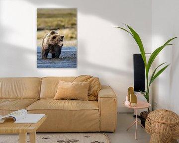 Grizzly beer von Menno Schaefer