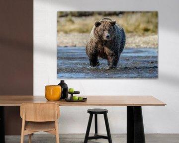 Grizzly beer jagend  von Menno Schaefer