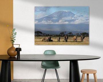 Kilimanjaro Elefanten von Roland Smeets
