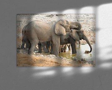 Olifanten waterpret von Dexter Reijsmeijer