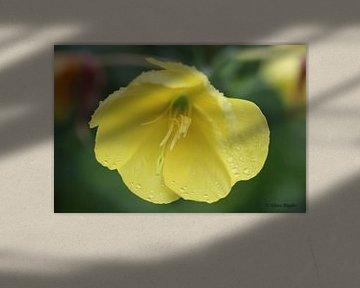 Gelbe Blume von Riegler klaus
