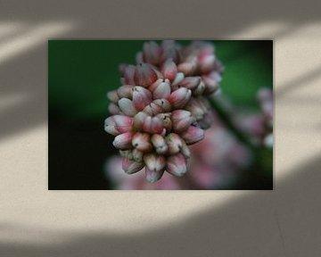 bloem von NanKee Fotografie