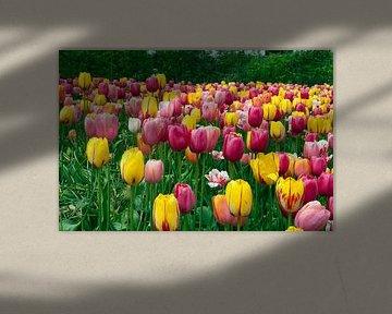 veld met tulpen von Compuinfoto .
