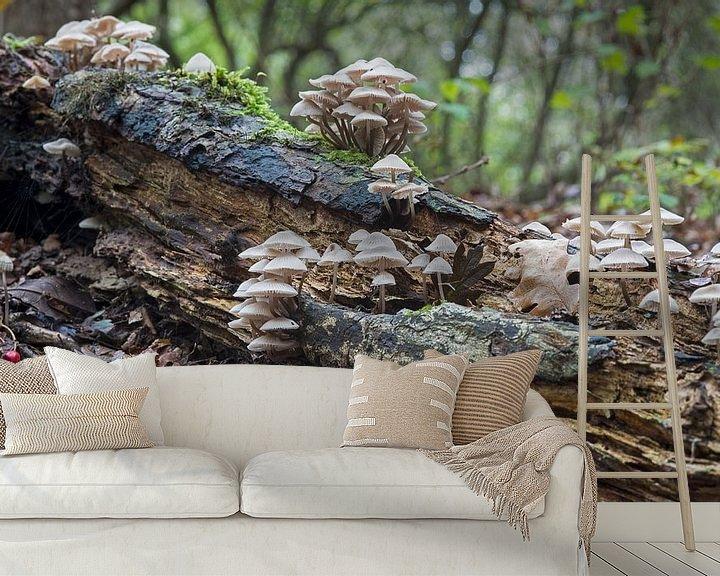 Sfeerimpressie behang: dorp van paddestoelen van Compuinfoto .