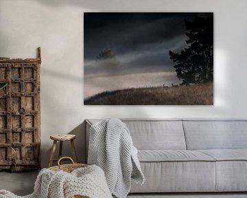 Rothirsch während einem nebligen Morgen von Ronald van Dijk