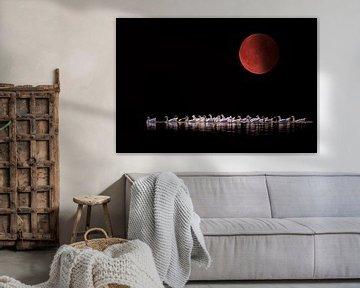 Bloedmaan 2015 von Tejo Coen