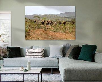 Olifanten kudde van Lotte van Dulmen