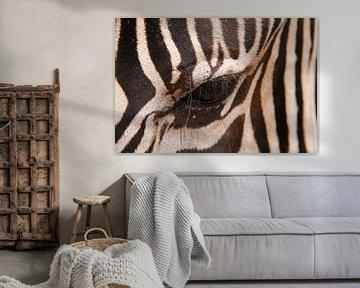 Zebra van LottevD