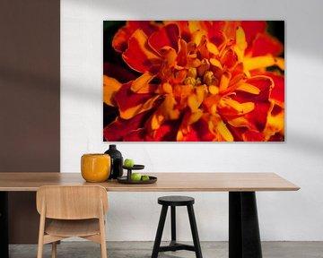 Bright coloured flower van Roque Klop