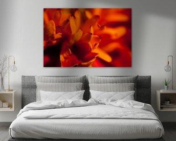 Fel rood-oranje bloem van Roque Klop