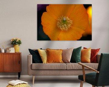 Oranje bloem van Roque Klop