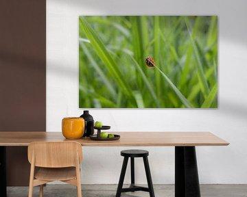 Lieveheersbeestje van Marco van den Arend
