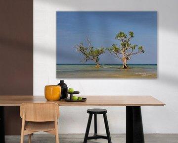 Mangrove bomen in het water. van Jos Pannekoek