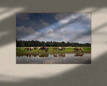 Paarden op de Groesplaat van Jaap Tempelman