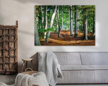 Étude de la maison dans les bois sur Pascal Raymond Dorland