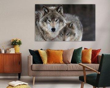 Deux Loups van Renald Bourque