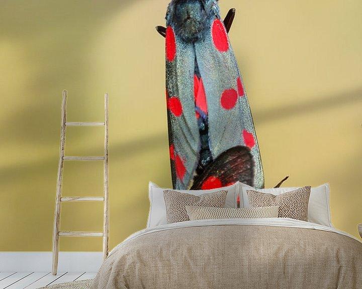 Sfeerimpressie behang: sint-jansvlinder van Pim Leijen