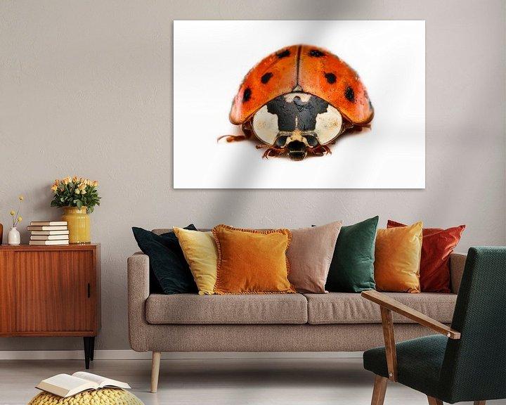Sfeerimpressie: Lieveheersbeestje van Victor van Dijk