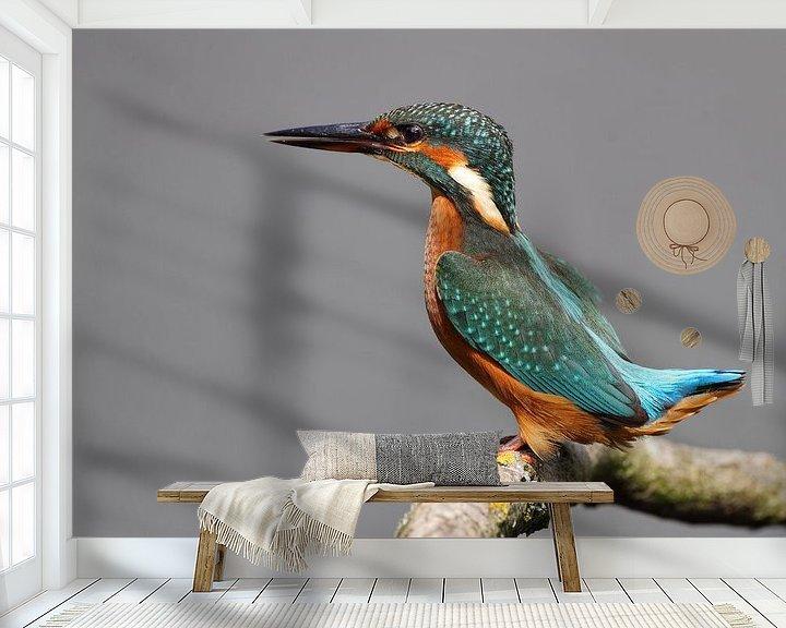 Sfeerimpressie behang: IJsvogel van Menno Schaefer