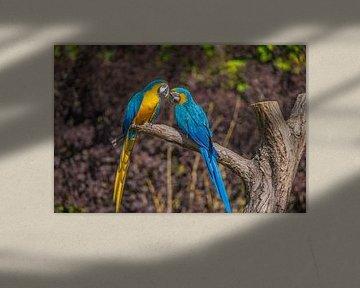 twee papegaaien op een tak van Fred Leeflang