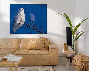 Snowy Owl von Renald Bourque
