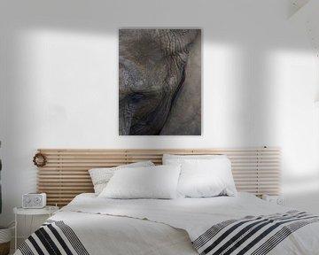 Olifant (savanne)