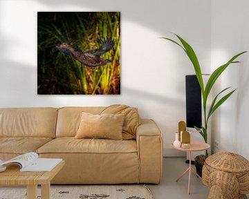 Wilde vrouwtjes eend van Ruud Peters