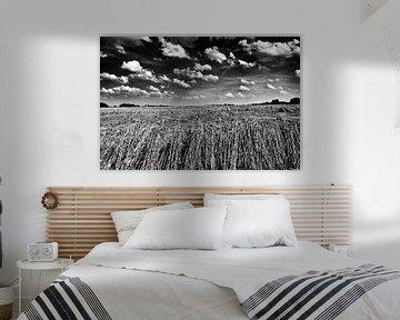 Graan in polderlandschap in zwart-wit
