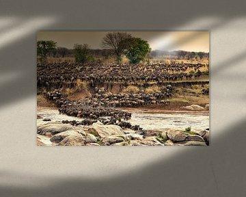 Herde Gnus ueberqueren bei ihrer jaehrlichen Wanderung den Mara Fluss von Jürgen Ritterbach