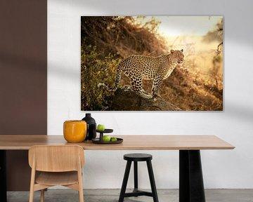 femelle léopard au coucher du soleil sur Jürgen Ritterbach