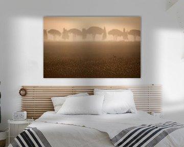 Toscane, 2008 von Arno Fooy