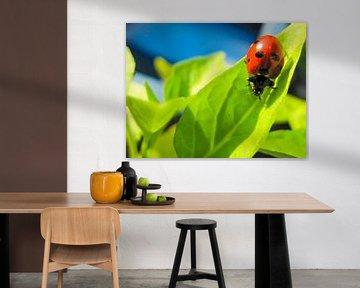 Ladybird van Leonie Versantvoort