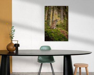 Mother Lynx van Hans van Gurp