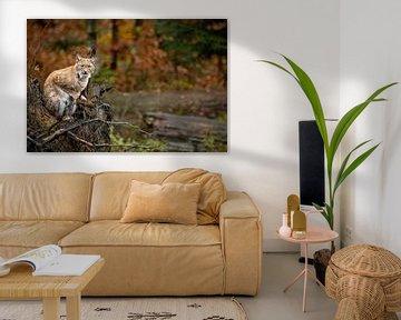 Young Lynx in Bavarian Forest van Hans van Gurp