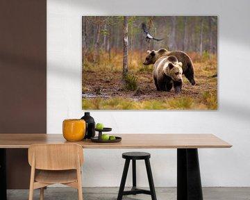 Young bears van Petra ter Veer