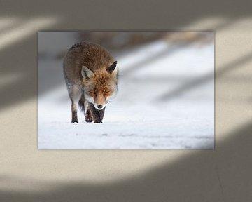 Vos lopend over de sneeuw von Menno Schaefer
