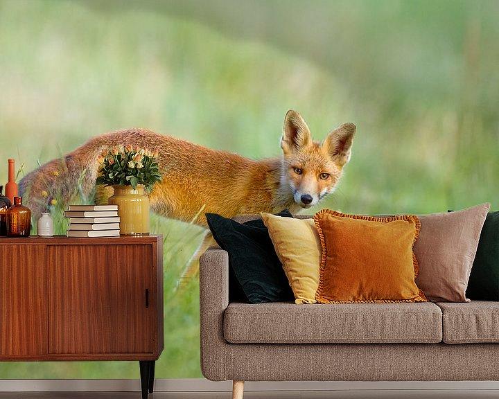 Sfeerimpressie behang: Jonge vos in het gras van Menno Schaefer