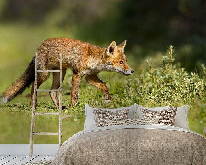 Sfeerimpressie behang: Een jonge vos van Menno Schaefer