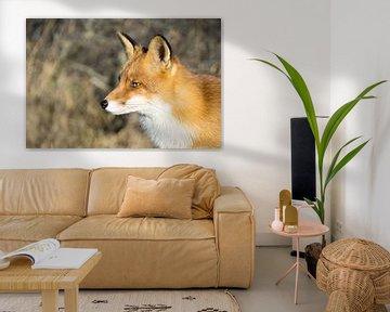 Heerlijke zonnige dag voor de vos.  van Sungi Verhaar