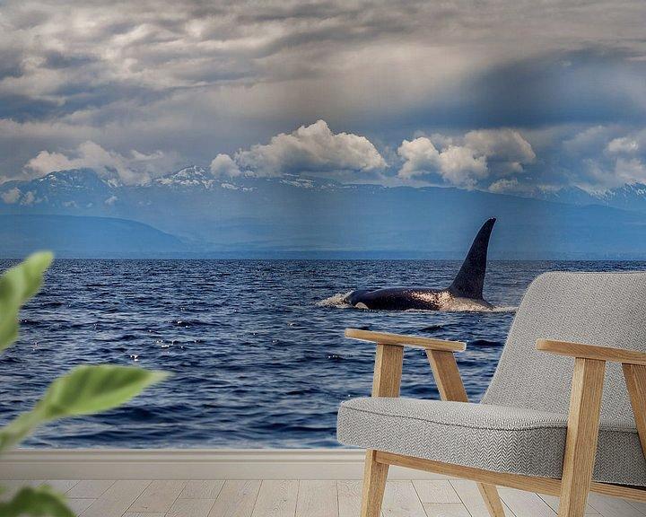 Sfeerimpressie behang: Een orka komt boven met de grote rugvin van Menno Schaefer