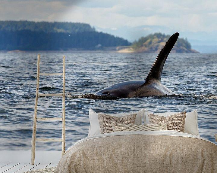 Sfeerimpressie behang: Een orka van Menno Schaefer