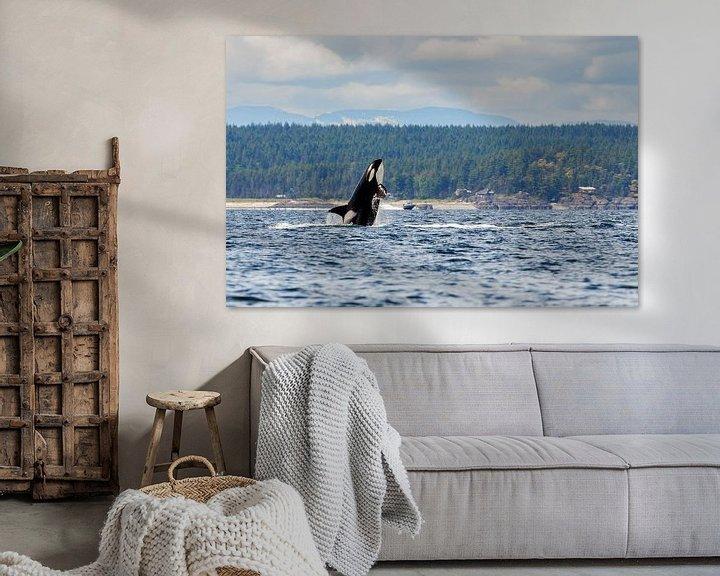 Impression: Een springende orka sur Menno Schaefer