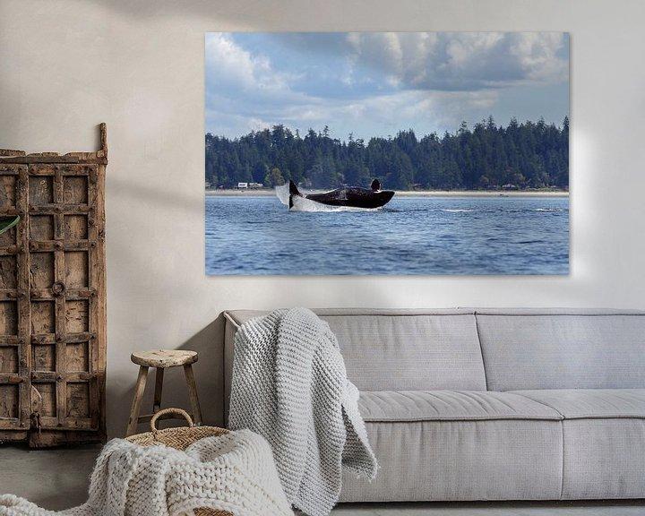 Impression: Orca whale sur Menno Schaefer