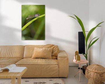 Libelle op groene stengel von Mariska Geschiere