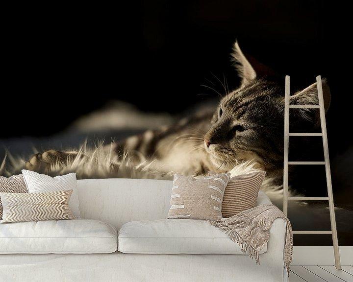 Sfeerimpressie behang: Huisdier / kat / kitten relaxen in de zon van Ramon Siahaya