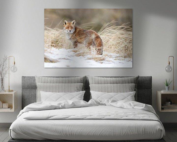 Sfeerimpressie: Een vos in de sneeuw van Menno Schaefer