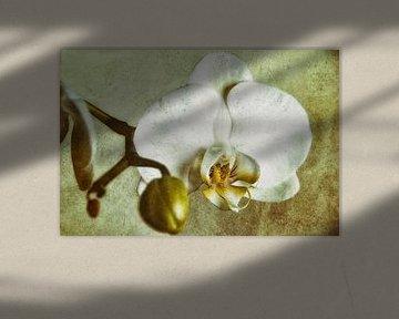 blanc Orchid sur Christine Nöhmeier